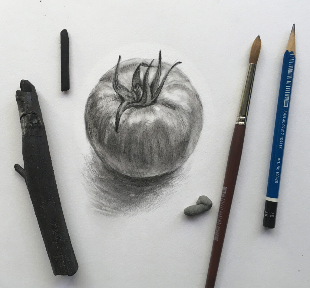 VanDusen Botanical Drawing classes online Drawing of a tomato with drawing tools