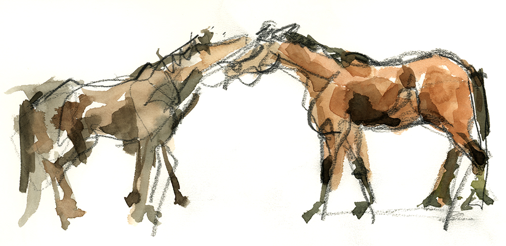 Horse sketch, watercolour, observational drawing